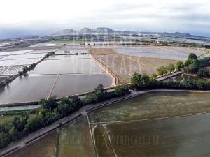 Paisajes Verticales - Fotografía aérea - AGRICULTURA Y MEDIO AMBIENTE (Arrozales Pals)